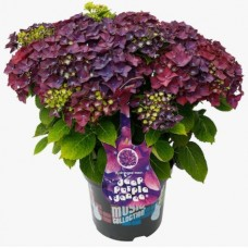 Max Factor румяна Creme Puff Blush 05 Lovely Pink